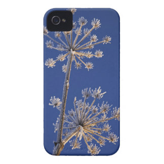 Skyward view of Cow Parsnip in winter covered in Case-Mate iPhone 4 Case