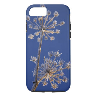 Skyward view of Cow Parsnip in winter covered in iPhone 8/7 Case
