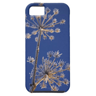 Skyward view of Cow Parsnip in winter covered in iPhone SE/5/5s Case