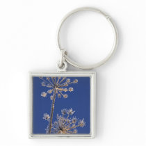 Skyward view of Cow Parsnip in winter covered in Keychain