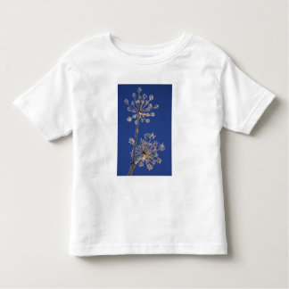 Skyward view of Cow Parsnip in winter covered in Toddler T-shirt