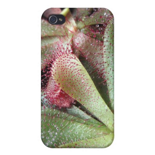 Slackii Sundew Plant Photo Cover For iPhone 4