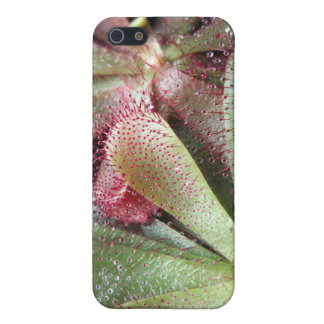 Slackii Sundew Plant Photo Cover For iPhone SE/5/5s