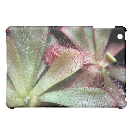 Slackii Sundew Plant Photo iPad Mini Cover