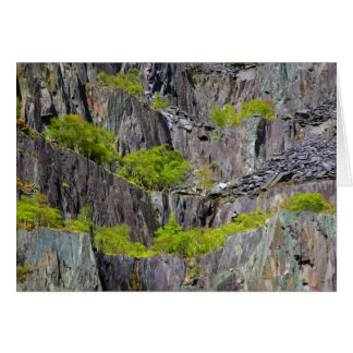 Slate cliff with trees cards