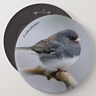 Slate-Colored Dark-Eyed Junco on the Pear Tree Button