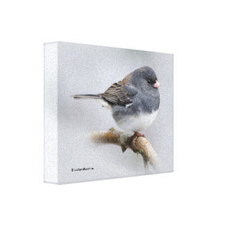 Slate-Colored Dark-Eyed Junco on the Pear Tree Canvas Print