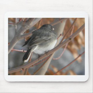 Slate-Colored Rocky Mountains Bird Mouse Pad