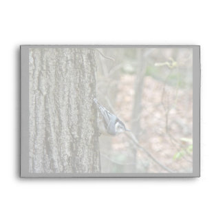 Slate Gray Nuthatch Birthday Songbird Envelope