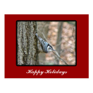 Slate Gray Nuthatch Christmas Songbird Christmas Postcard