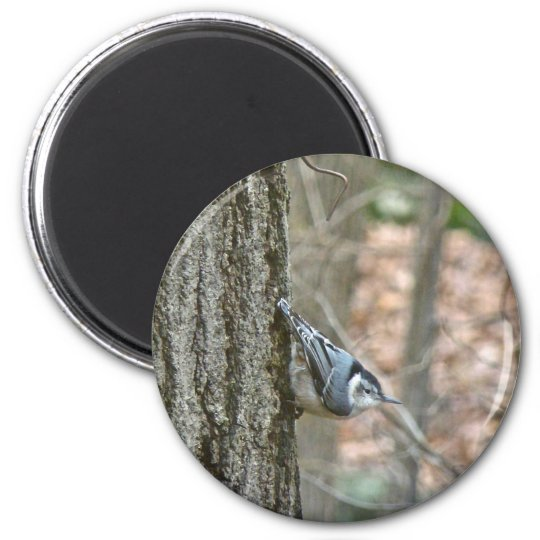 Slate Gray Nuthatch Songbird Coordinated Items Magnet