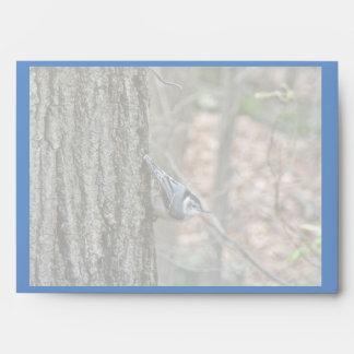 Slate Gray Nuthatch Songbird Envelope