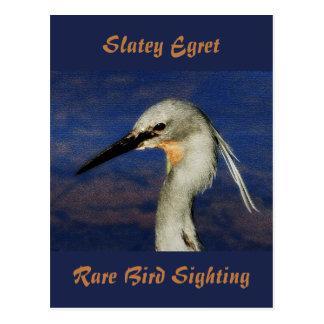 Slatey Egret Postcard