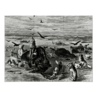 Slaughter of Buffaloes on the Plains Poster