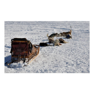 Sled and Dogs Poster