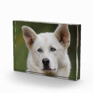 sled dog award