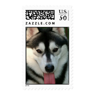 Sled Dog Postage Stamp