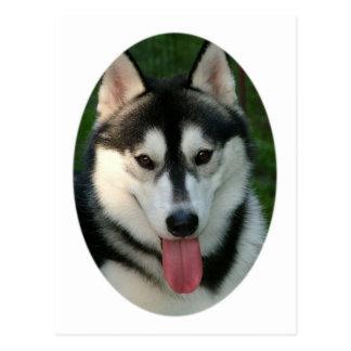 Sled Dog Postcard