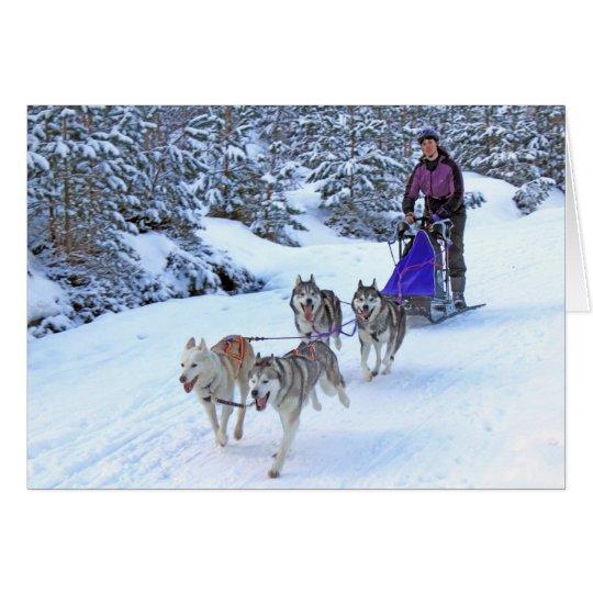Sled Dog Racing Card
