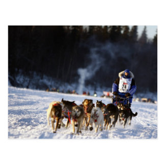 Sled Dog Racing in Alaska Postcard