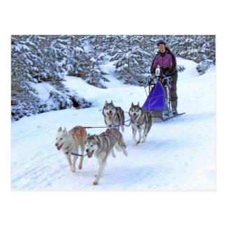 Sled Dog Racing Postcard