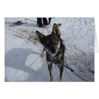 Sled Dog Winter Park Card