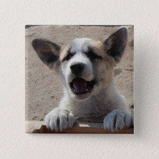 Sledge dog puppy button