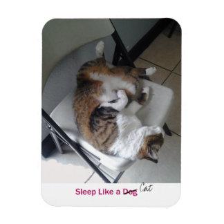 Sleep Like a Cat Magnet
