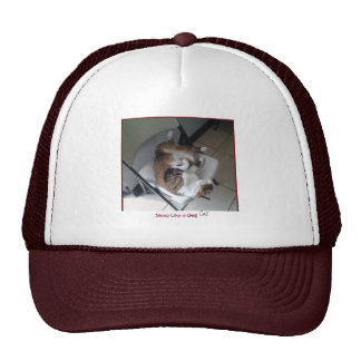 Sleep Like a Cat Trucker Hat