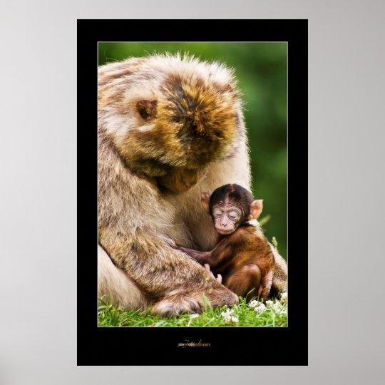 sleep little baby monkey poster