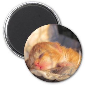 Sleep Tight Sweet Kitty 2 Inch Round Magnet