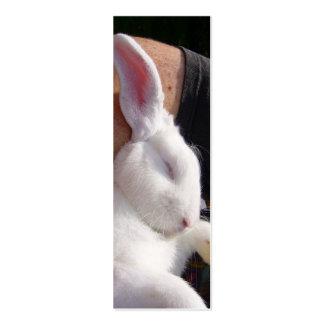 Sleep white Bunny Rabbit Business Card