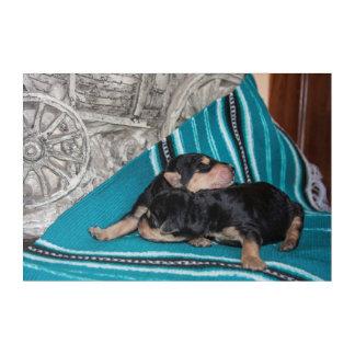 Sleeping Airedale Puppies Acrylic Wall Art