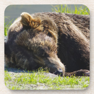 Sleeping Alaskan Grizzly Drink Coaster