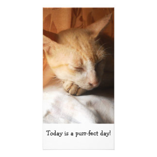 Sleeping Asian Ginger Cat by the Window-Photo_Card Card