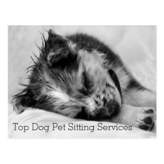 Sleeping Australian Shepherd Puppy Pet Sitter's Postcard