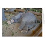 Sleeping Baby Elephant Cards