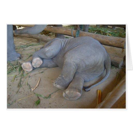 sleeping baby elephant greeting card zazzle