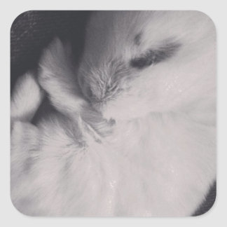 Sleeping baby rabbit photo design. square sticker