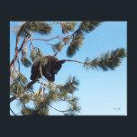 "Sleeping Bear Cub Canvas Print<br><div class=""desc"">Photograph of a bear cub napping in a tree in Bear Country,  South Dakota.</div>"