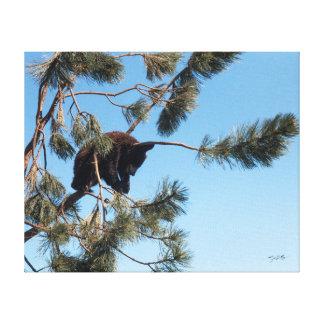 Sleeping Bear Cub Canvas Print
