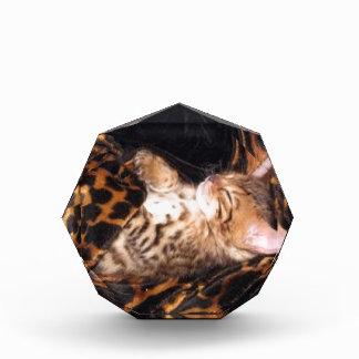 sleeping bengal kitten acrylic award