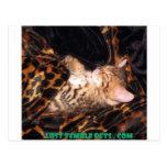 sleeping bengal kitten postcard
