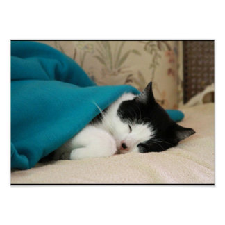 Sleeping Black and White Cat with Blue Blanket Poster