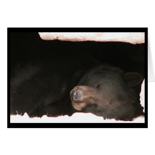 Sleeping Black Bear Card