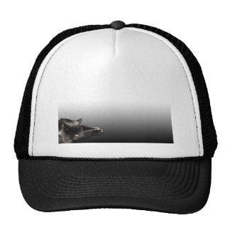 Sleeping Black Cat on Black Gradient Trucker Hats
