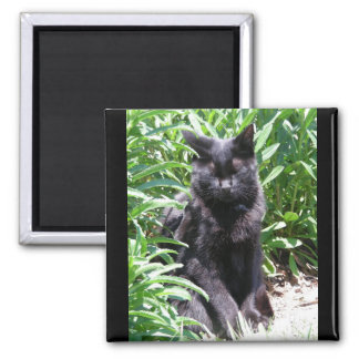 Sleeping Black Kitty Cat (Airplane series 2 of 3) 2 Inch Square Magnet