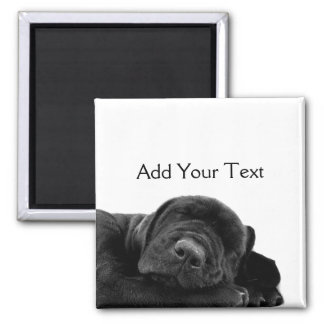 Sleeping Black Puppy 2 Inch Square Magnet