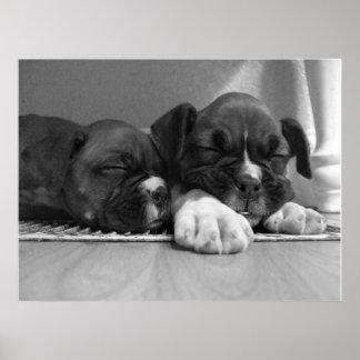 Sleeping Boxer puppies canvas print