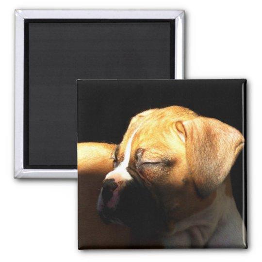 Sleeping boxer puppy magnet